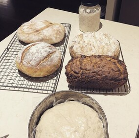 Student takehome - starter, 4 baked bread & one overnight dough